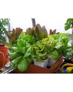 MegaGarden hydroponic system